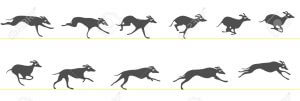 13557184-Running-greyhound-Stock-Vector-whippet